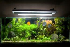Aquarium Light Guide